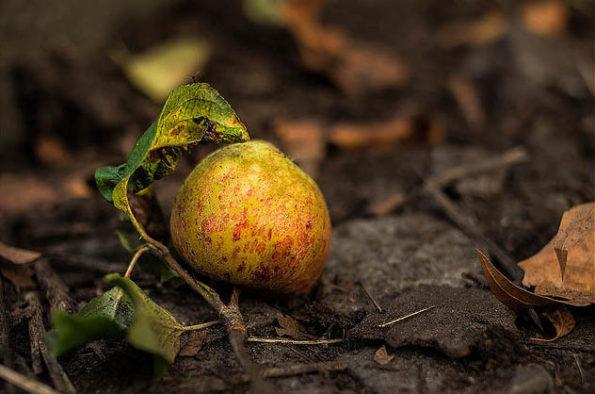Apfel, Herbst, Fruch, Foto: Sulamith Sallmann