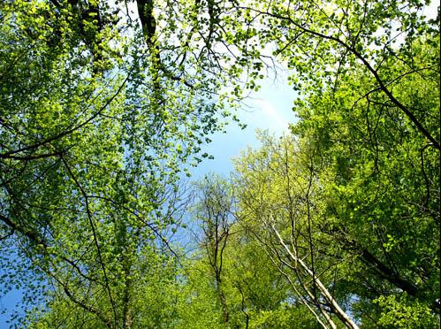 Bäume, Natur, Sauerstoff, Foto: Sulamith Sallmann